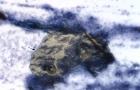 Frog feces
