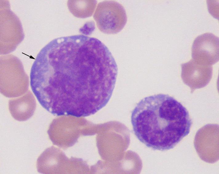 canine blood eclinpath