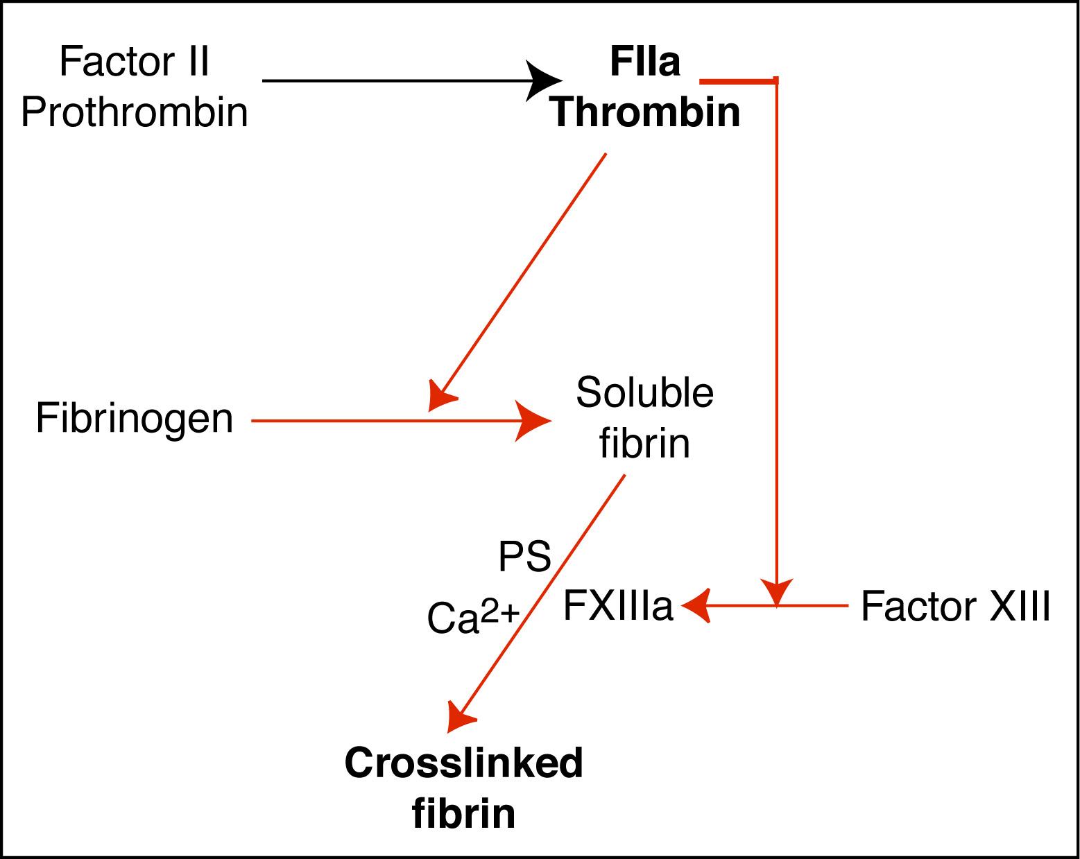 Formation Of Fibrin Eclinpath