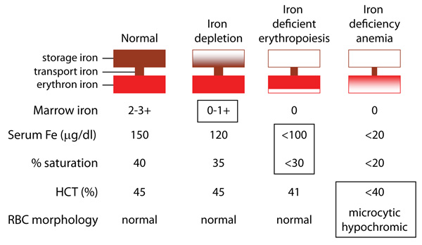 Development of iron deficiency anemia eclinpath